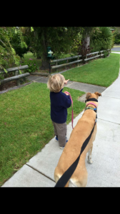 double leash dog training